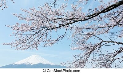 Mt. Fuji with cherry blossom