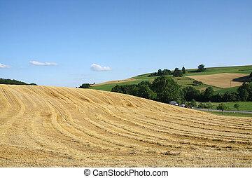小麥, 領域, 以後, 收穫