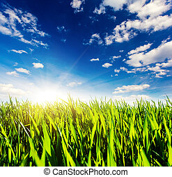 grass - Beautiful sunny day in the field with blue sky....