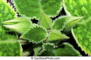 cserepes növény