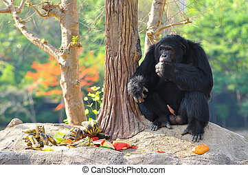 Chimps are generally fruit and plant eaters.