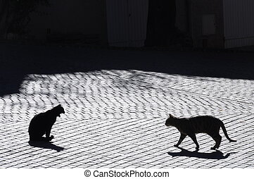 Cats in Castellet village, France - Backlight of cats in...