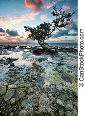 Sunrise over reef island. - Low tide at the Florida Keys...