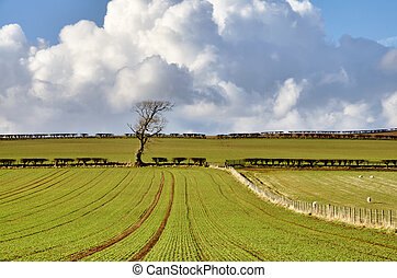 Pastoral scene in English Countryside