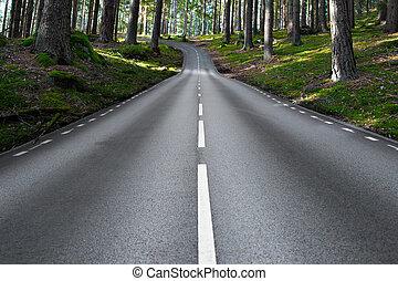 asphalt road in forest landscape