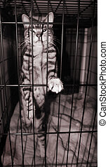 In the Slammer - Feline felon behind bars - focus on cat...
