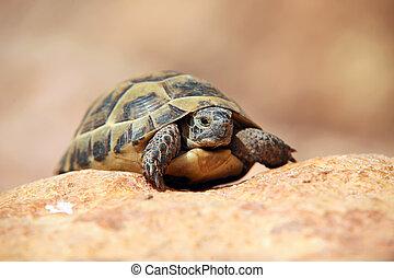 爬, 烏龜, 被模糊不清