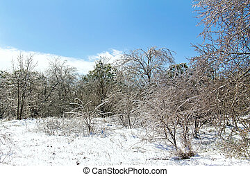 Forest Clearing with icy trees in sunlight