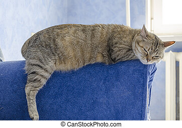 Cat on a sofa - The cat lies on a sofa