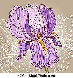 Purple Iris - Hand drawn illustration of a purple iris
