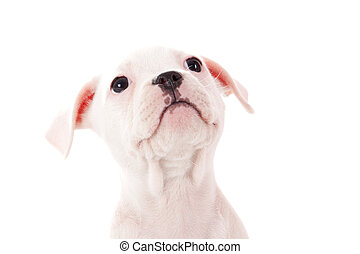 My dogface - Crossbreed cute puppy in a studio having a...