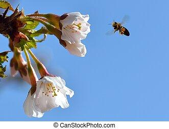 Bee in Flight - A bee on a flower in flight