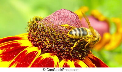 flower and small bee