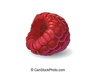 Raspberry - Drawing of raspberry. The illustration was made...