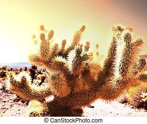 Cactus - Saguaro National Park