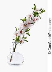 Beauty flowers of almond