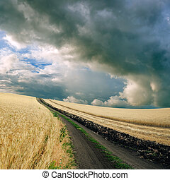 Wheat field - Cloudy sky over the wheat field