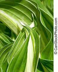 Artistic green leafs - Green leafs in floating shape forming...