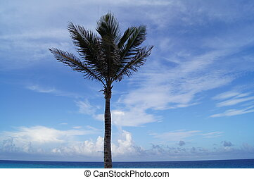 Tropical Palm Tree - Palm Tree taken in Cancun, MX at the...