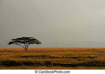 Lone Acacia Tree Against Expansive Misty Sky - A lone acacia...