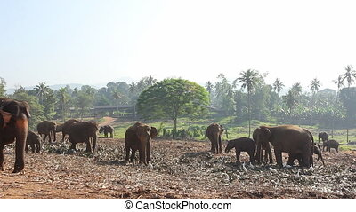 Group Of Elephants.