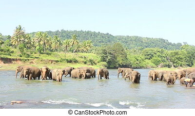 Elephants playing in the water.
