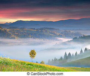 Foggy summer sunrise in the mountains