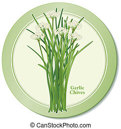 Garlic Chives Herb Icon - Garlic Chives icon, aromatic herb...