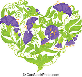 Convolvulus Flowers heart isolated