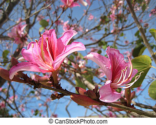 two spring pink blooming flowers - two spring pink flower...