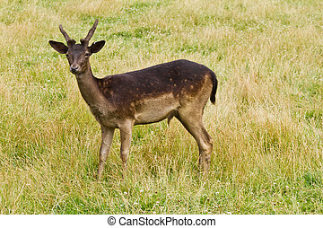 Wild deer in nature