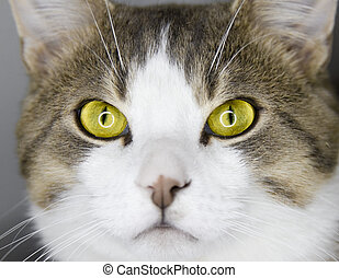 Yellow cats eyes - Crazy Yellow cats eyes details and macro...