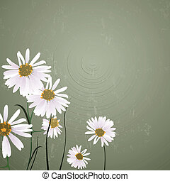 Vector Background with Daisies - Vector Illustration of a...