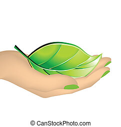 Female hand holding green leaf. Vector