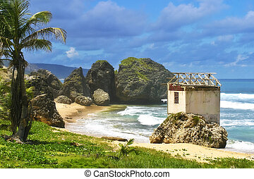 Bathsheba rocks - Barbados East Coast, Atlantic Ocean