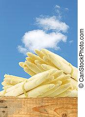 white asparagus shoots - freshly harvested white asparagus...