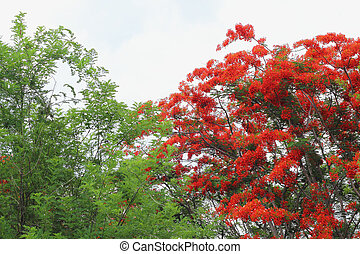 Green tree with red flowers.