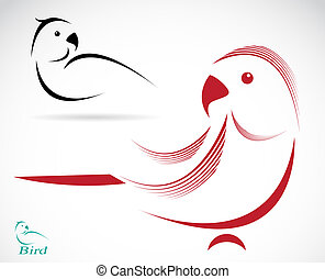 Vector image of an parrot on white background