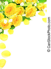 yellow rose - I took many yellow roses in a white background...