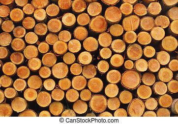 Stacked logs - Freshly cut logs - Wooden abstract background