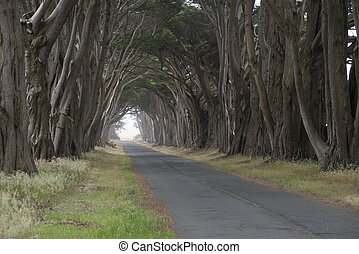 Road covered by a canopy of trees. - Tree canopy arching...