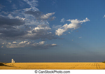 Grain silo behind corn field - Grain silo over a golden...