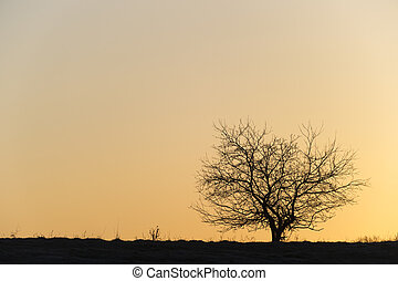 Silhouette of a single tree. - Silhouette of a single barren...