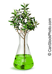 Tree growing in laboratory test beaker - Biotechnology...