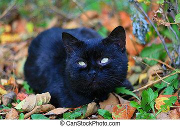 The black cat. - The black cat.