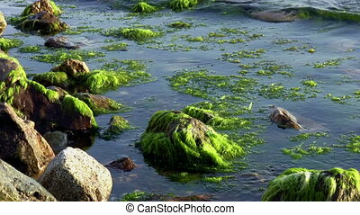 Mossy Rock By The Ocean