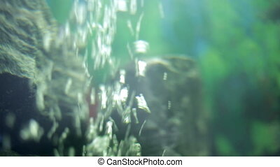 Underwater video background oxygen rises to the top