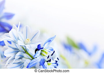 Spring flowers background - Floral background of first...