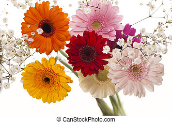Colourful Gerbera daisies on a sparkly pastel background