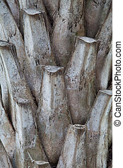 Photo of Palm tree bark background